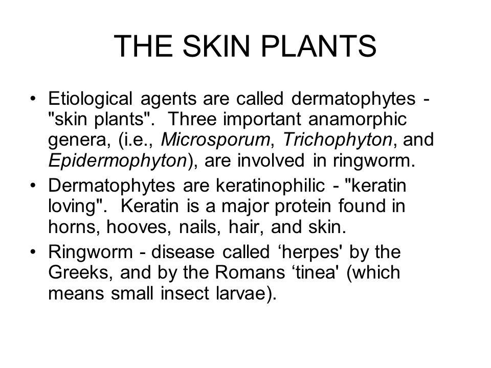 THE SKIN PLANTS