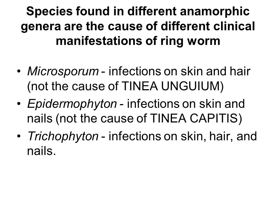 Species found in different anamorphic genera are the cause of different clinical manifestations of ring worm