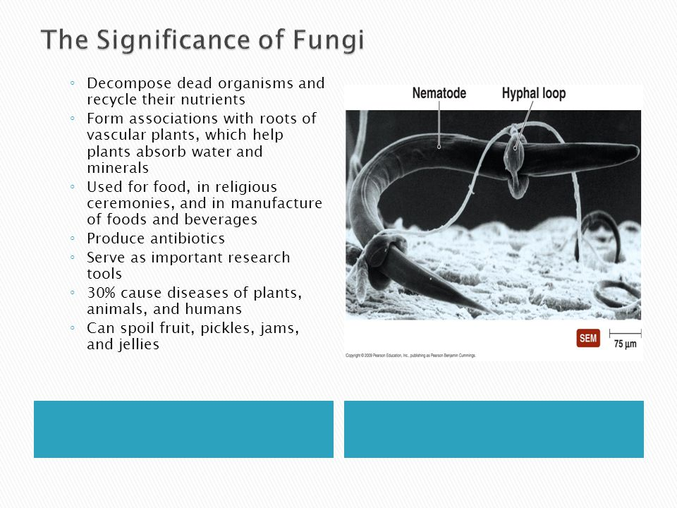 The Significance of Fungi