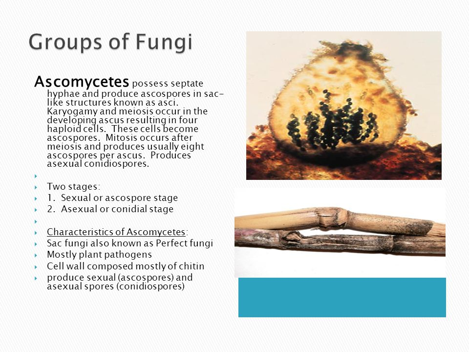 Groups of Fungi