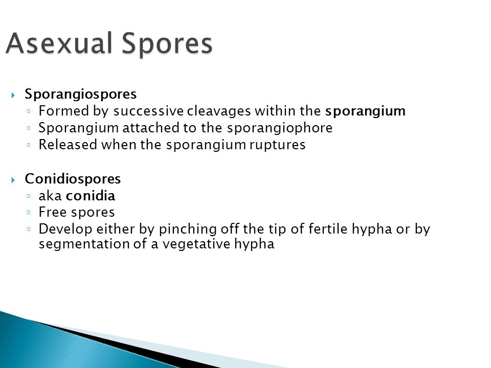 Asexual Spores Sporangiospores