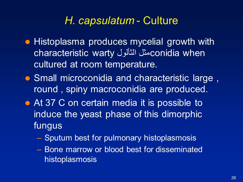 H. capsulatum - Culture Histoplasma produces mycelial growth with characteristic warty مثل الثألولconidia when cultured at room temperature.