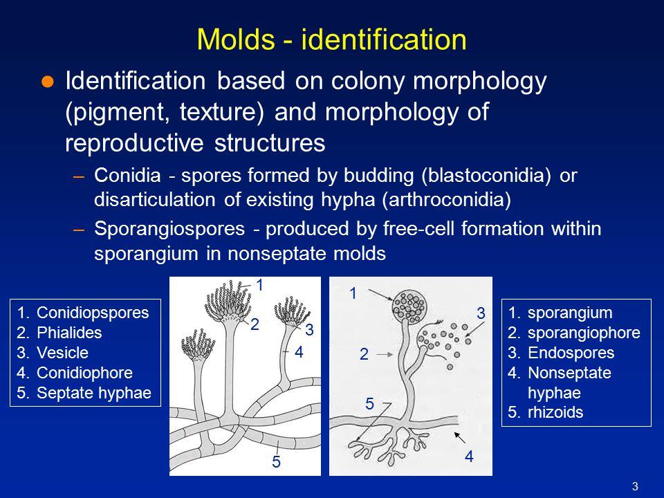 Molds - identification