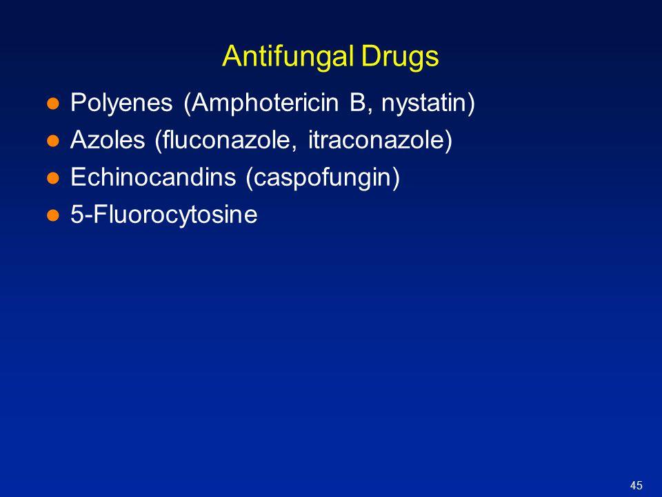 Antifungal Drugs Polyenes (Amphotericin B, nystatin)