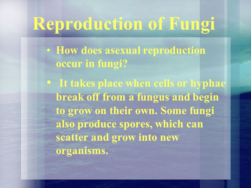 Reproduction of Fungi How does asexual reproduction occur in fungi