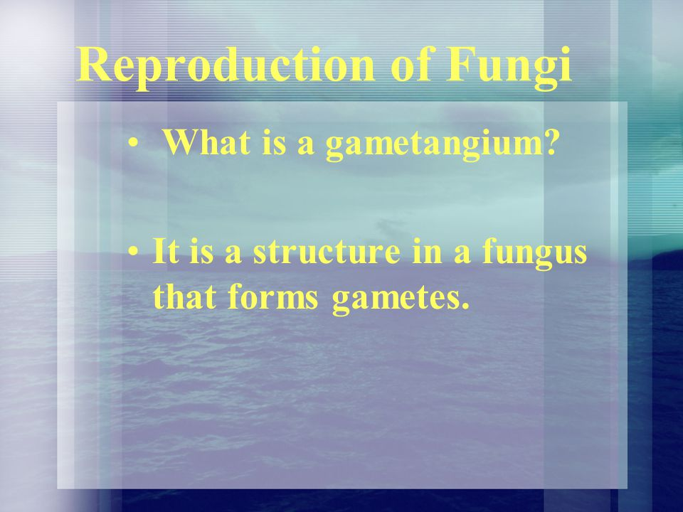 Reproduction of Fungi What is a gametangium