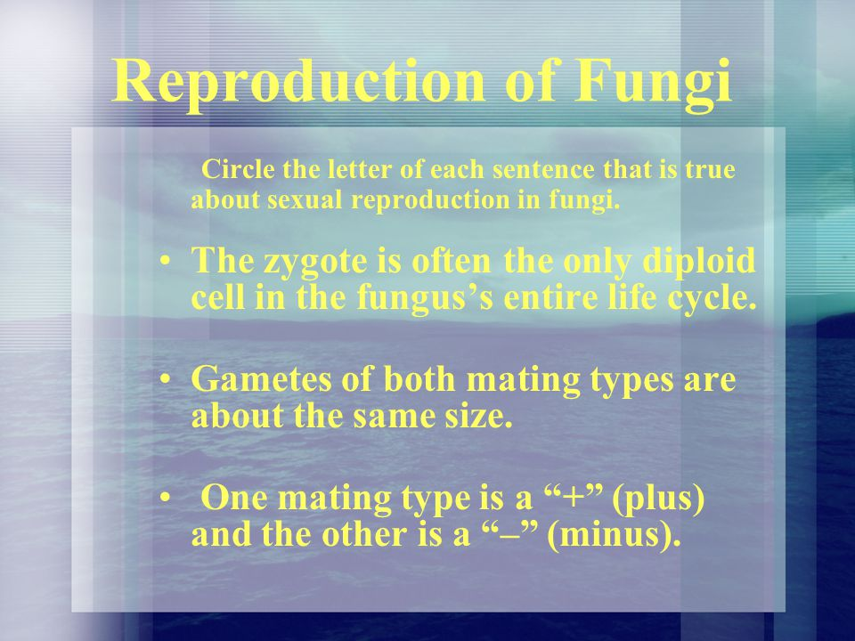 Reproduction of Fungi Circle the letter of each sentence that is true about sexual reproduction in fungi.