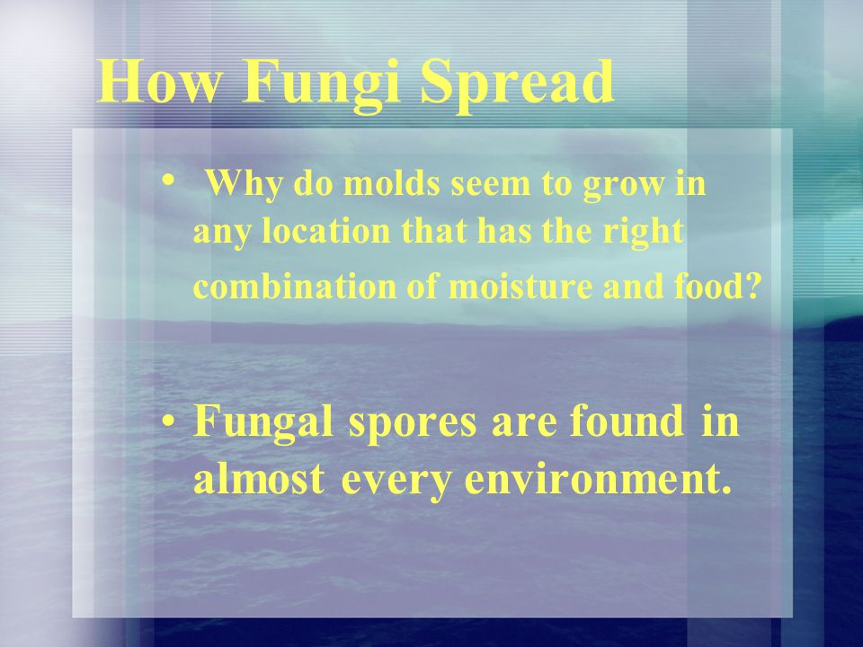 How Fungi Spread Why do molds seem to grow in any location that has the right combination of moisture and food