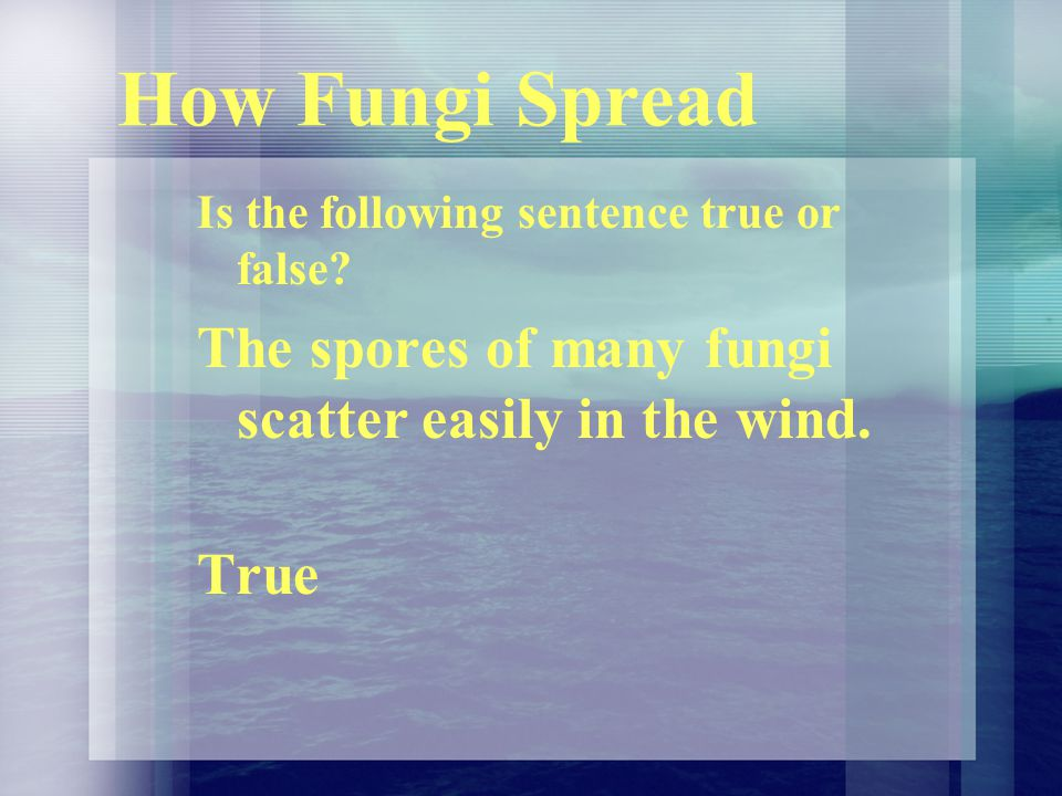 How Fungi Spread The spores of many fungi scatter easily in the wind.