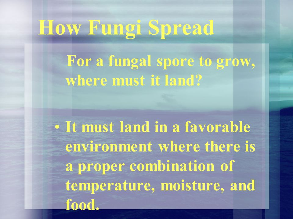 How Fungi Spread For a fungal spore to grow, where must it land