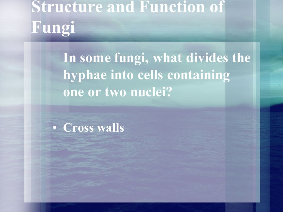 Structure and Function of Fungi