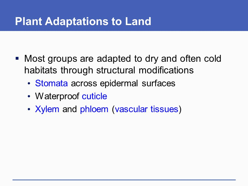 Plant Adaptations to Land