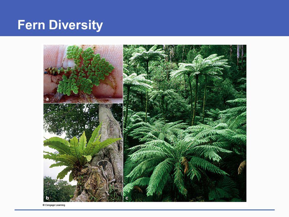 Fern Diversity