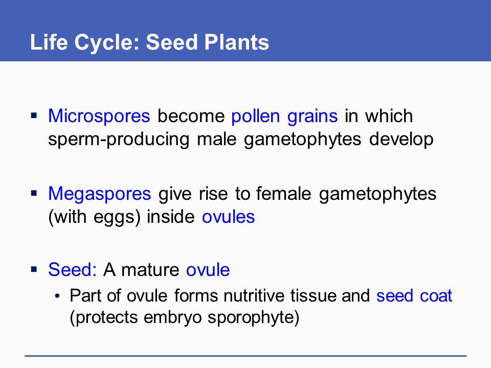 Life Cycle: Seed Plants