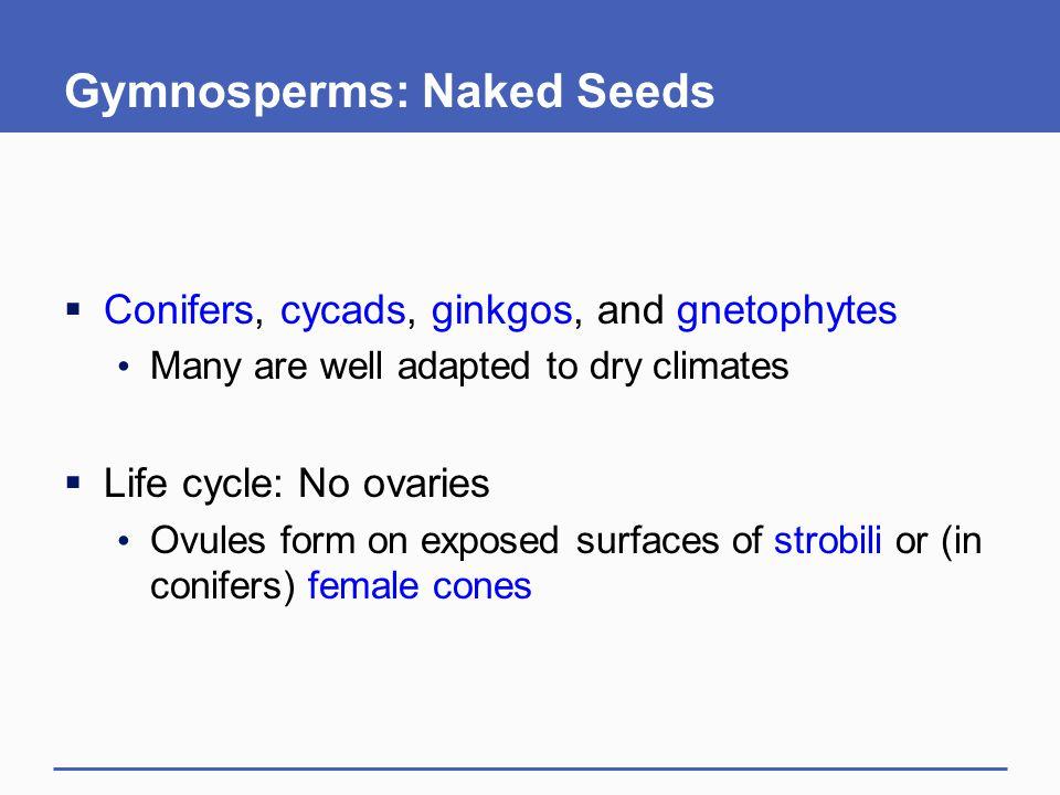 Gymnosperms: Naked Seeds