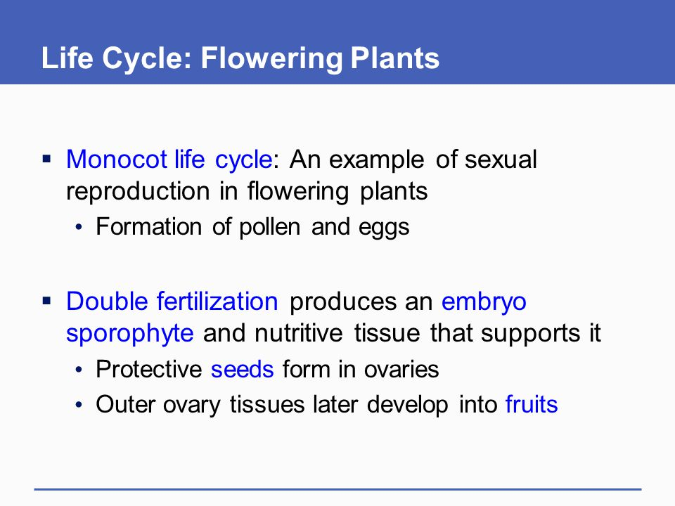 Life Cycle: Flowering Plants