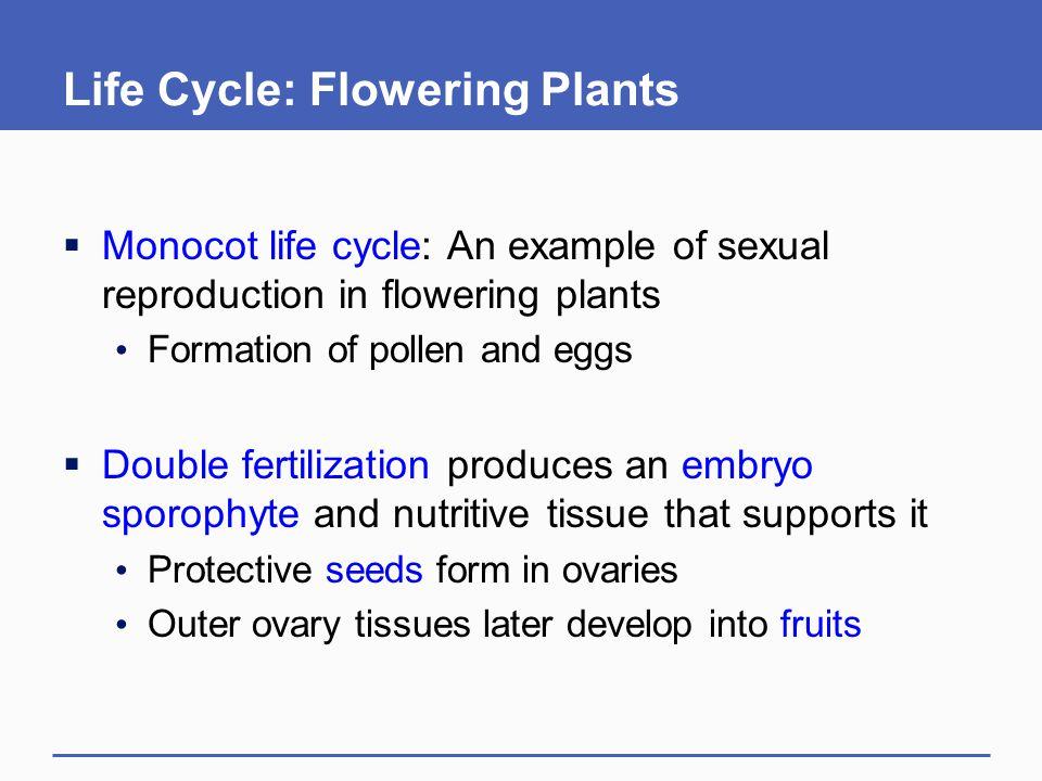 Life Cycle: Flowering Plants