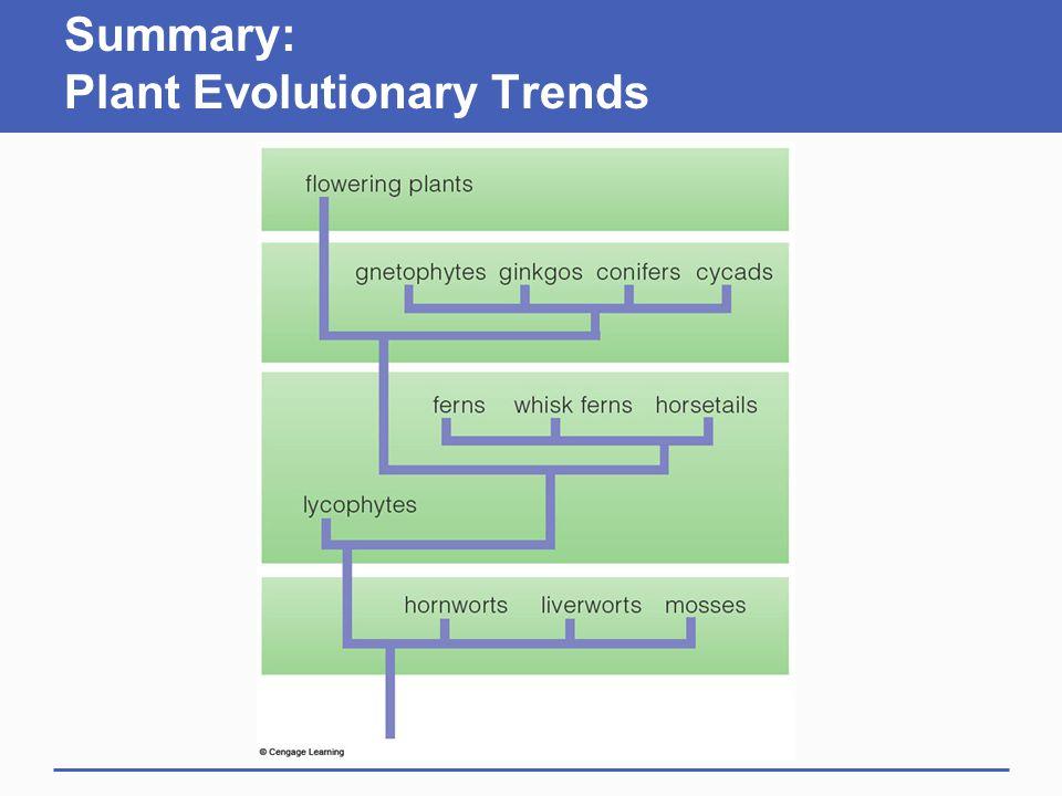 Summary: Plant Evolutionary Trends
