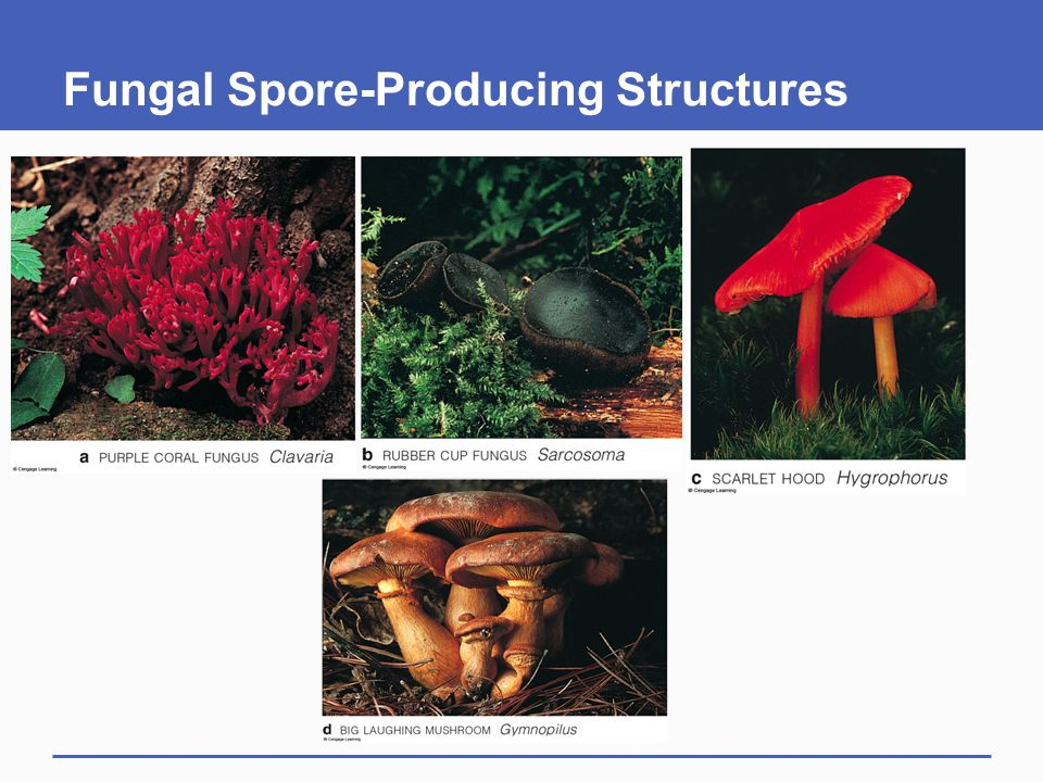 Fungal Spore-Producing Structures