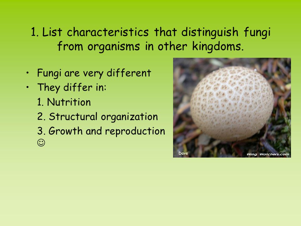 1. List characteristics that distinguish fungi from organisms in other kingdoms.