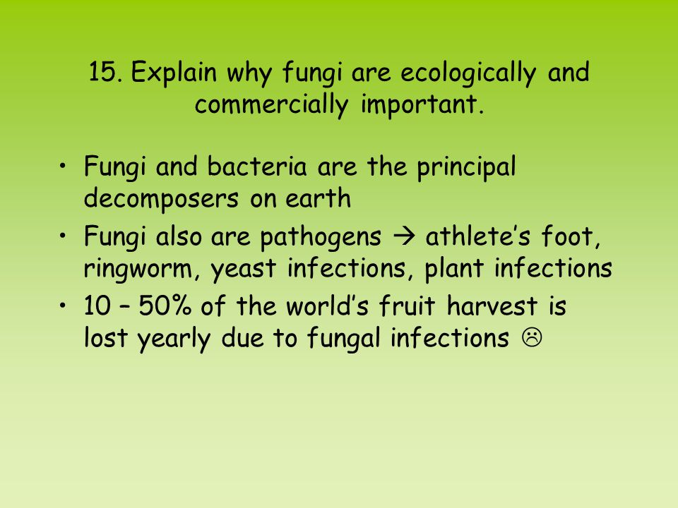 15. Explain why fungi are ecologically and commercially important.