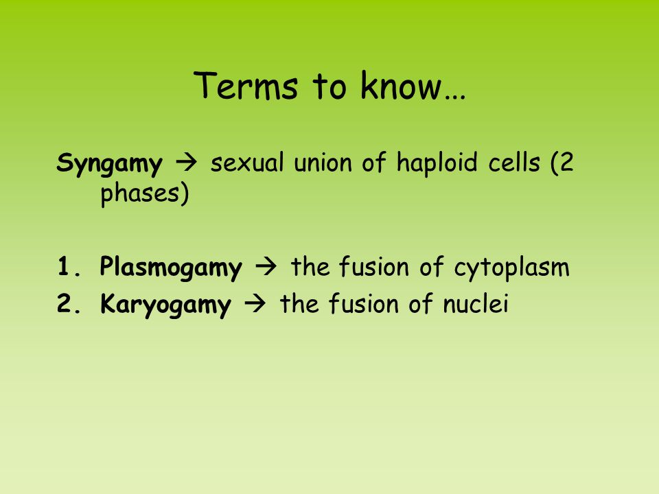 Terms to know… Syngamy  sexual union of haploid cells (2 phases)