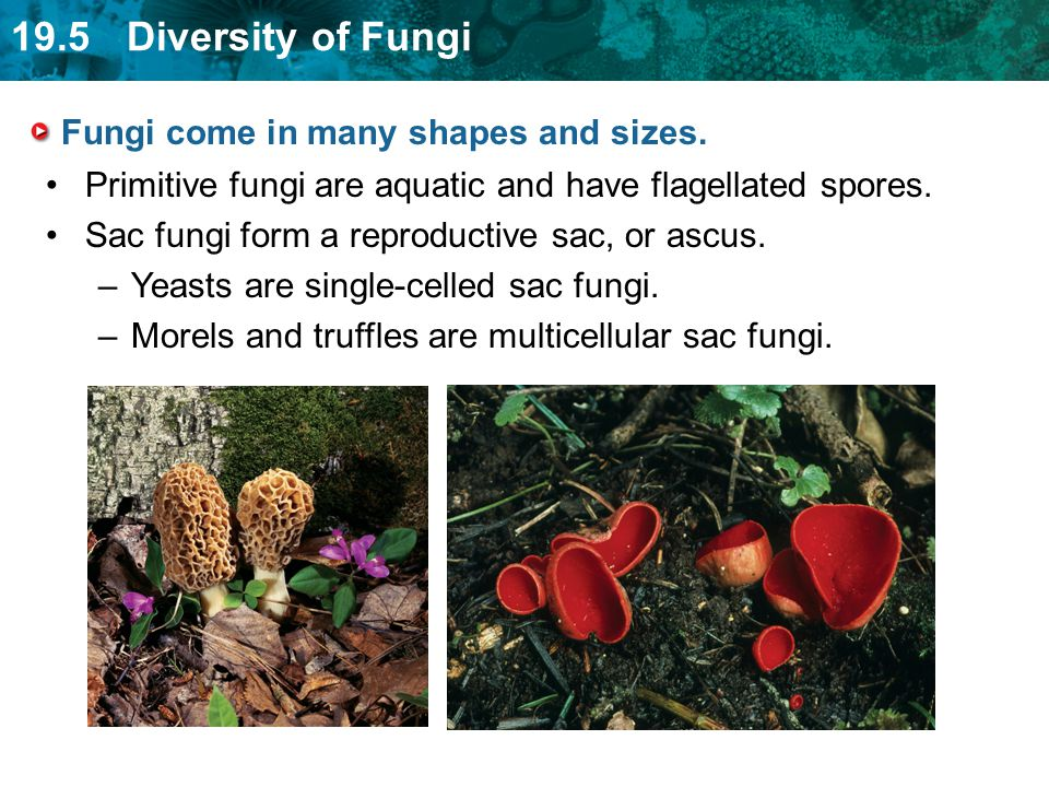 Fungi come in many shapes and sizes.