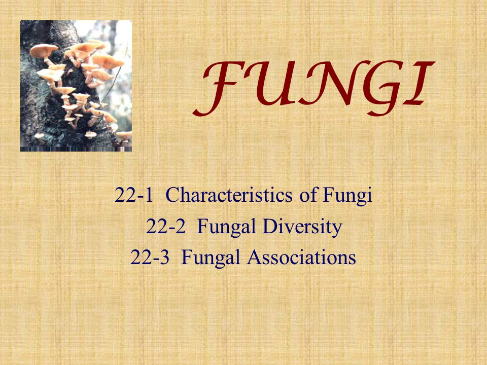 22-1 Characteristics of Fungi