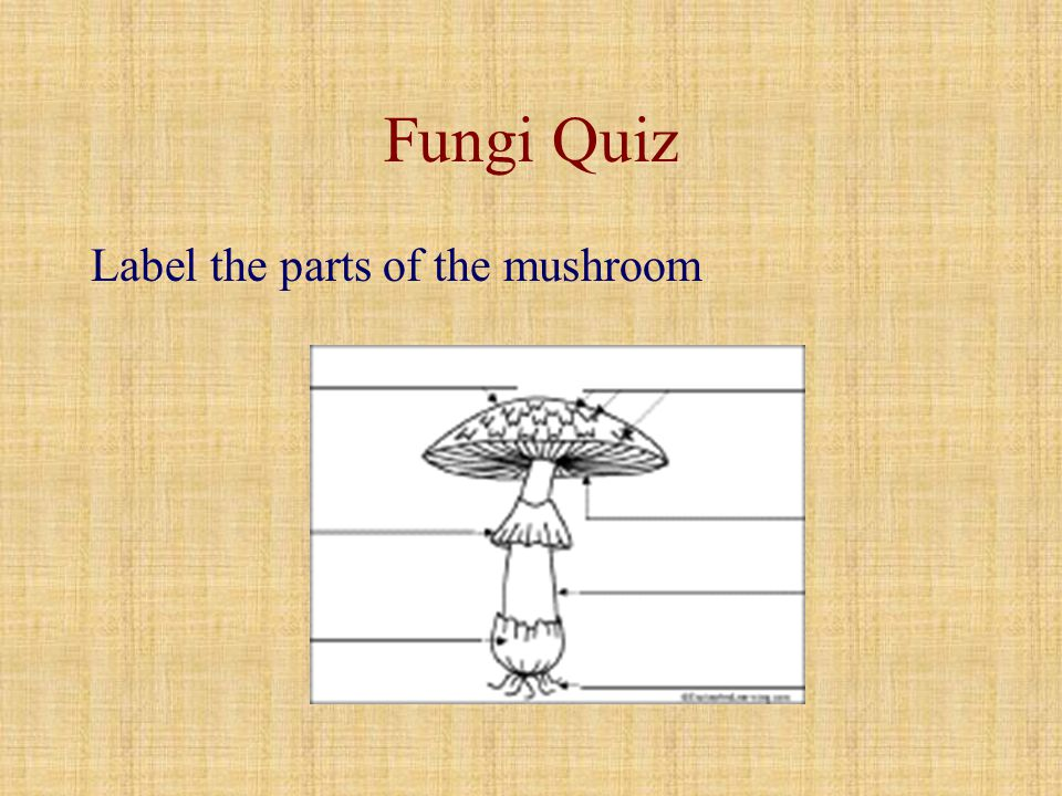 Fungi Quiz Label the parts of the mushroom