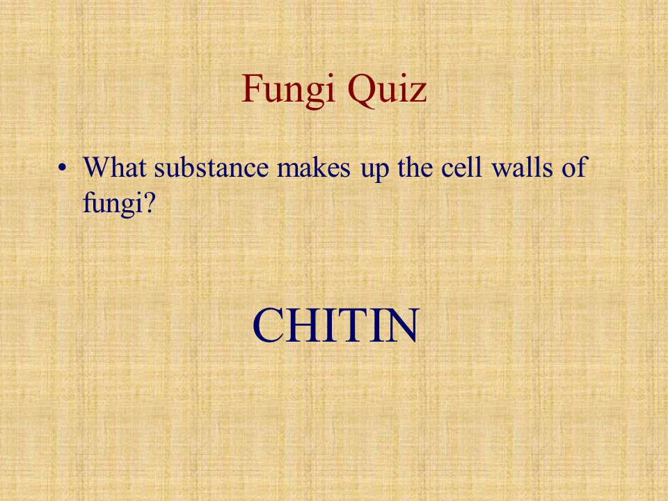 Fungi Quiz What substance makes up the cell walls of fungi CHITIN