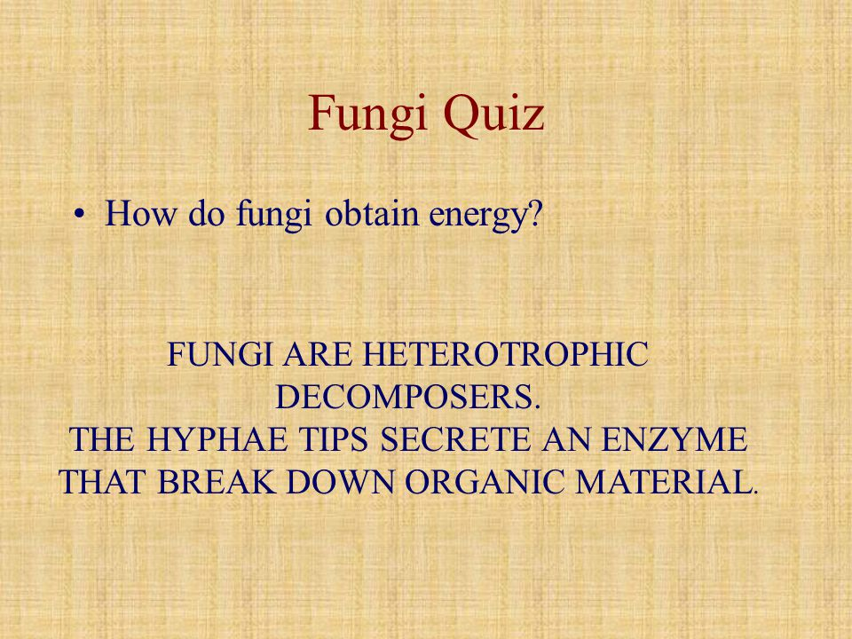 Fungi Quiz How do fungi obtain energy
