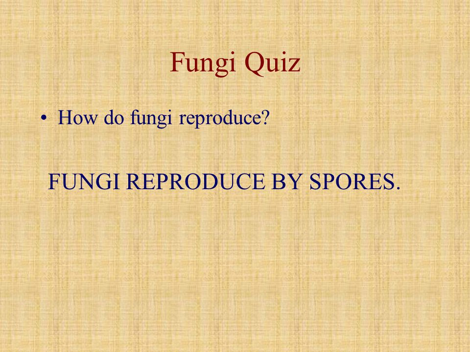 Fungi Quiz How do fungi reproduce FUNGI REPRODUCE BY SPORES.