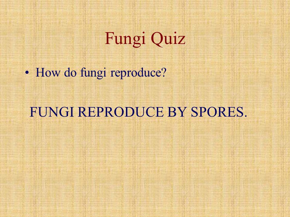 Fungi Quiz How do fungi reproduce FUNGI REPRODUCE BY SPORES.