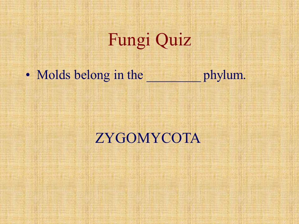 Fungi Quiz Molds belong in the ________ phylum. ZYGOMYCOTA