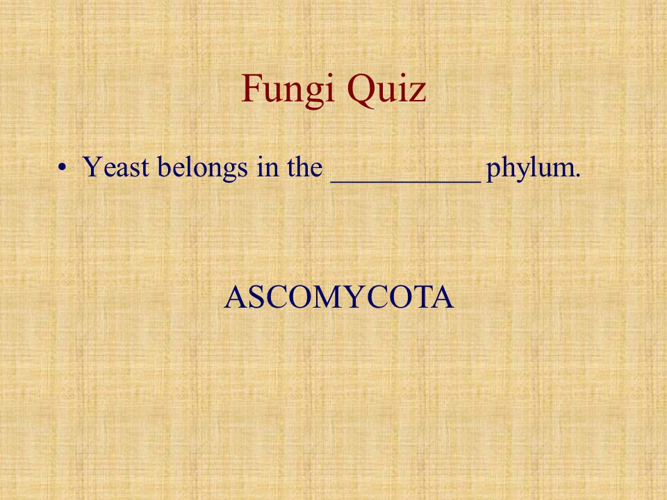 Fungi Quiz Yeast belongs in the __________ phylum. ASCOMYCOTA
