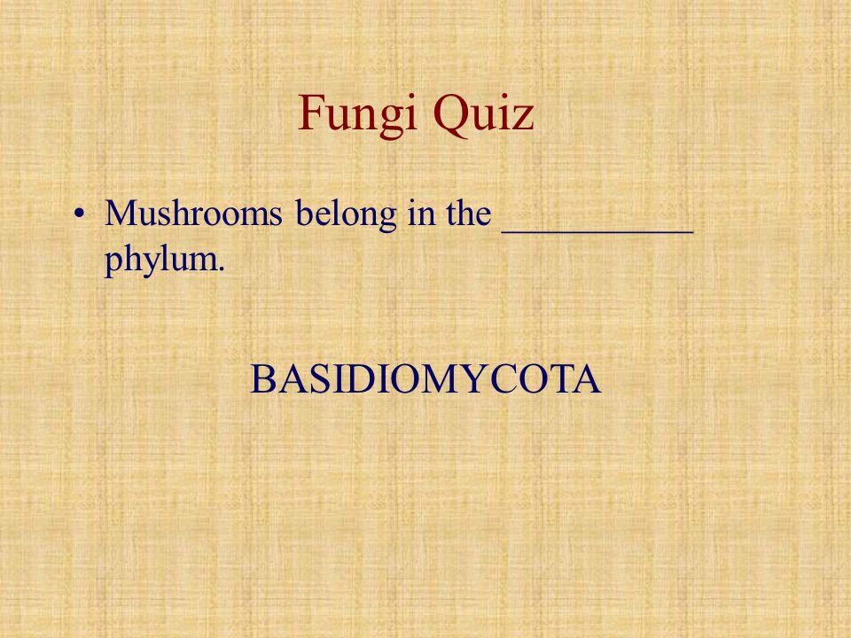 Fungi Quiz Mushrooms belong in the __________ phylum. BASIDIOMYCOTA