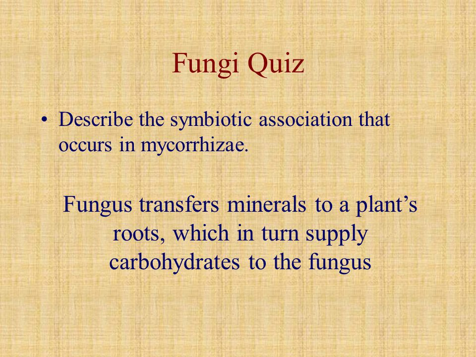 Fungi Quiz Describe the symbiotic association that occurs in mycorrhizae.
