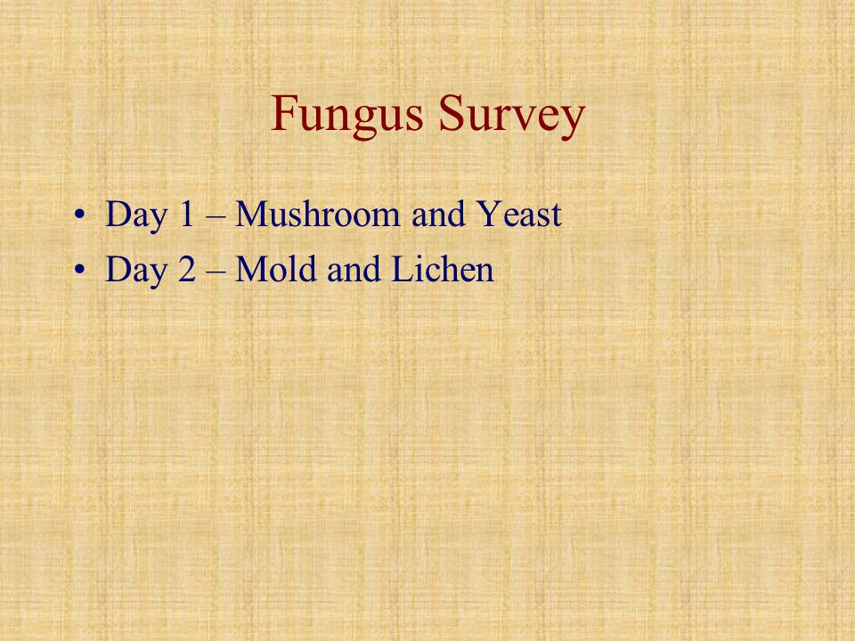 Fungus Survey Day 1 – Mushroom and Yeast Day 2 – Mold and Lichen