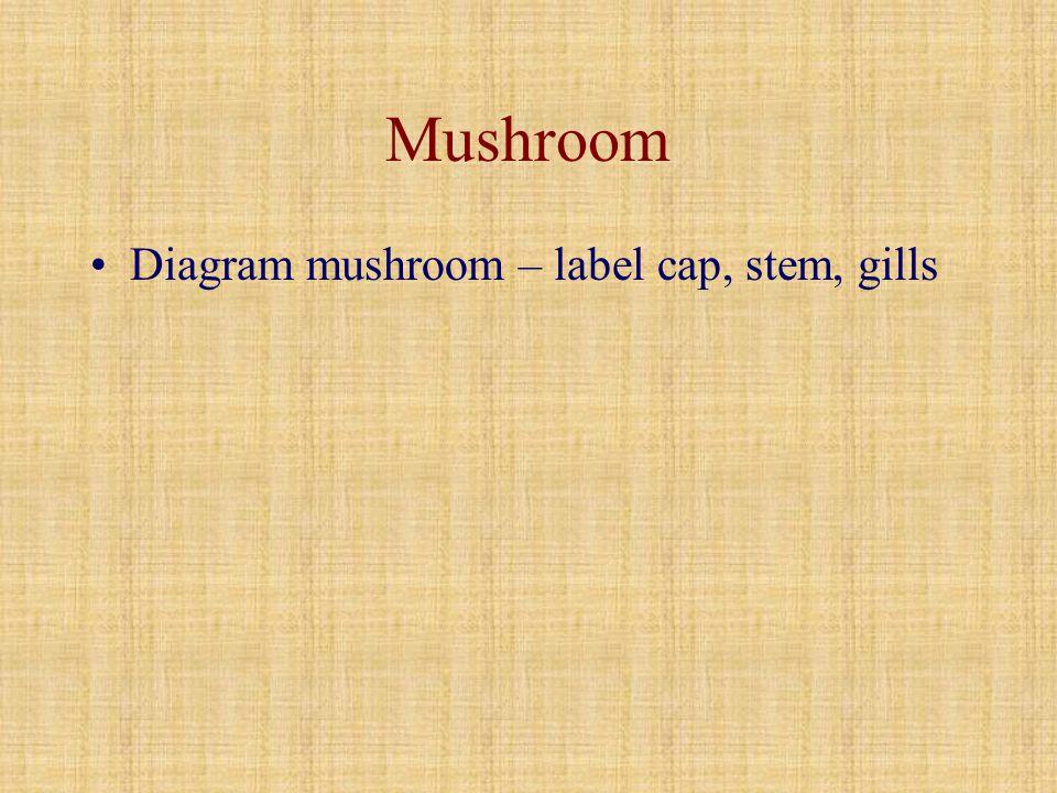 Mushroom Diagram mushroom – label cap, stem, gills