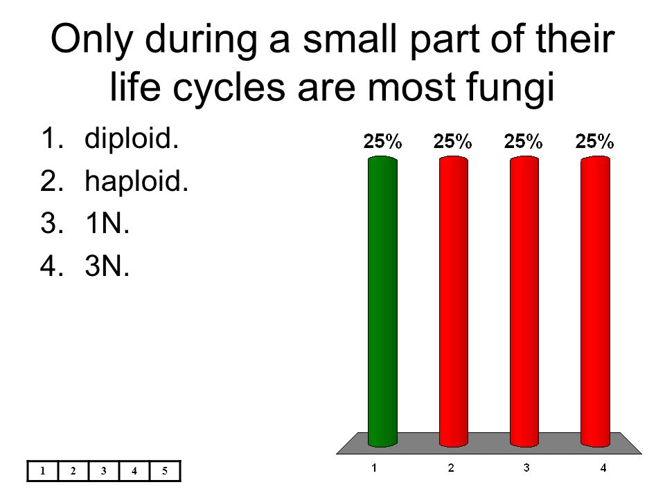 Only during a small part of their life cycles are most fungi