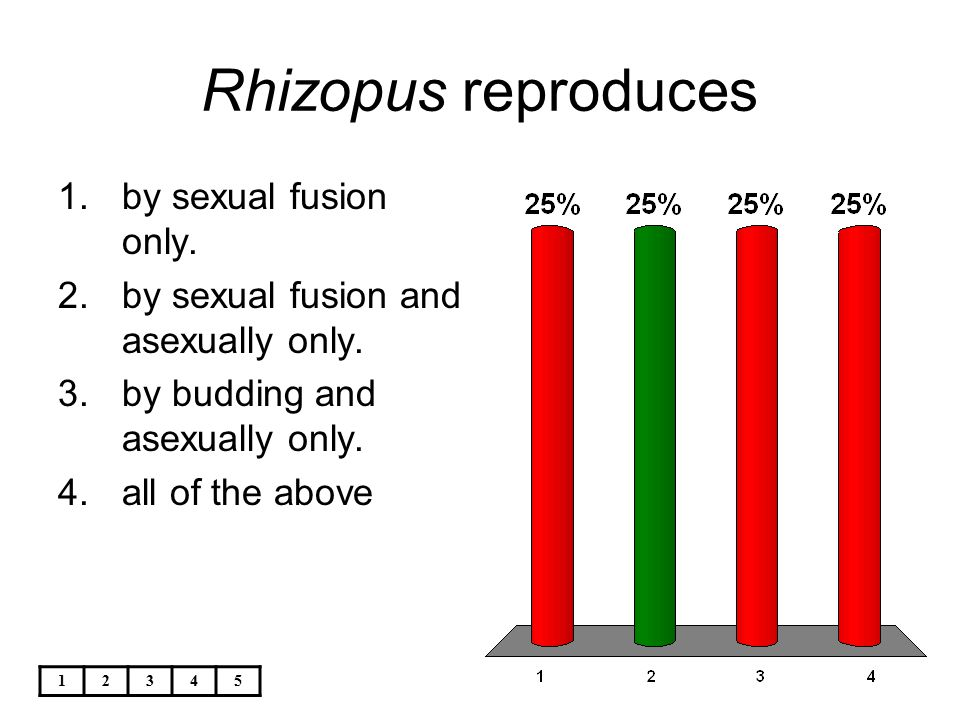 Rhizopus reproduces by sexual fusion only.