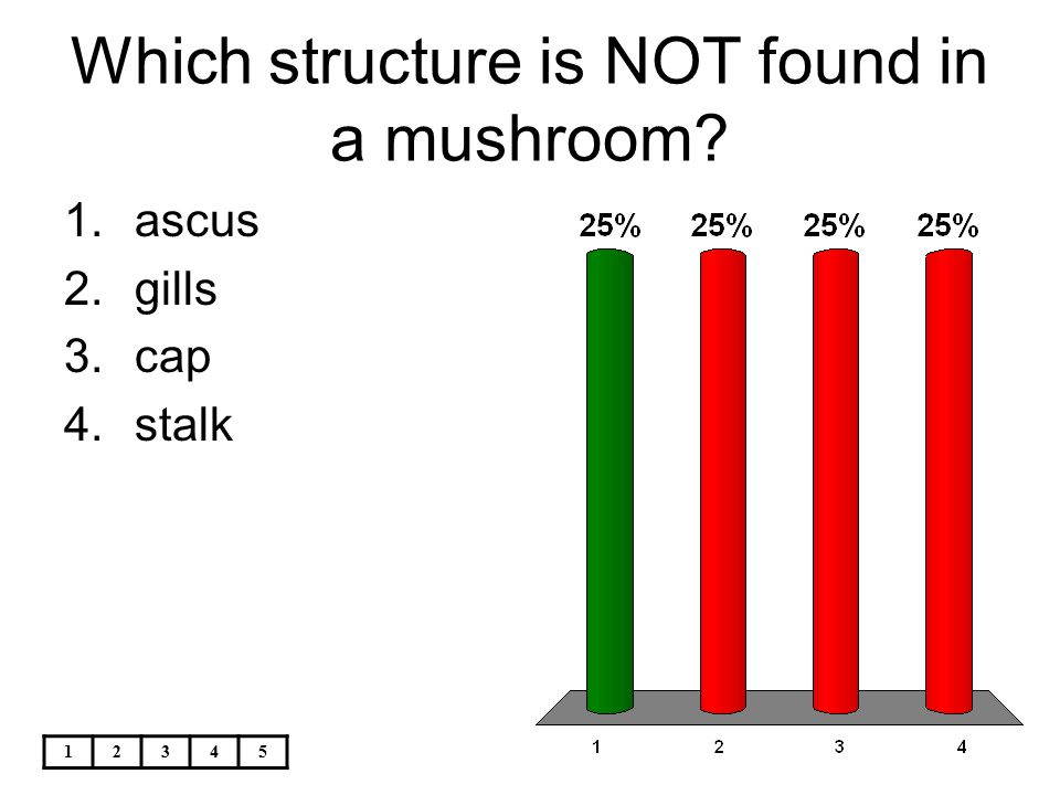 Which structure is NOT found in a mushroom