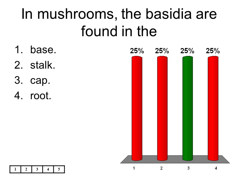 In mushrooms, the basidia are found in the