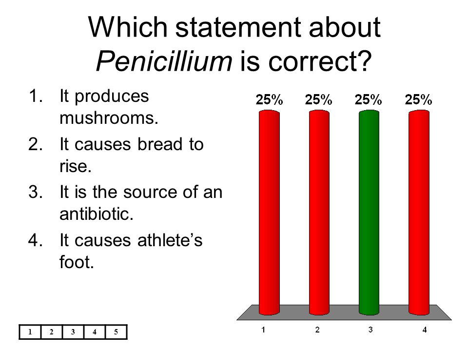 Which statement about Penicillium is correct