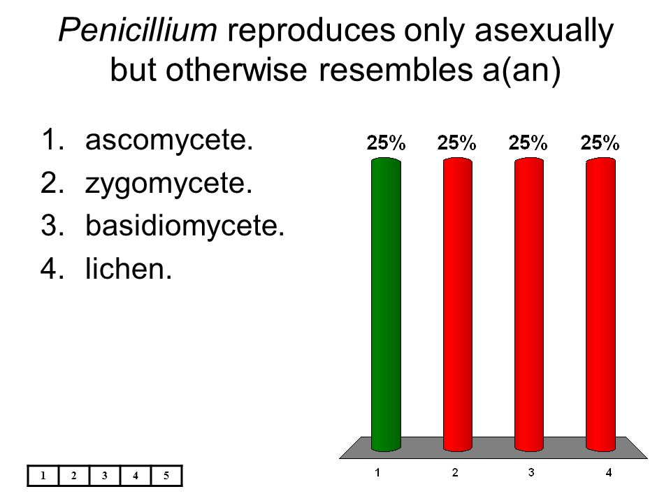 Penicillium reproduces only asexually but otherwise resembles a(an)