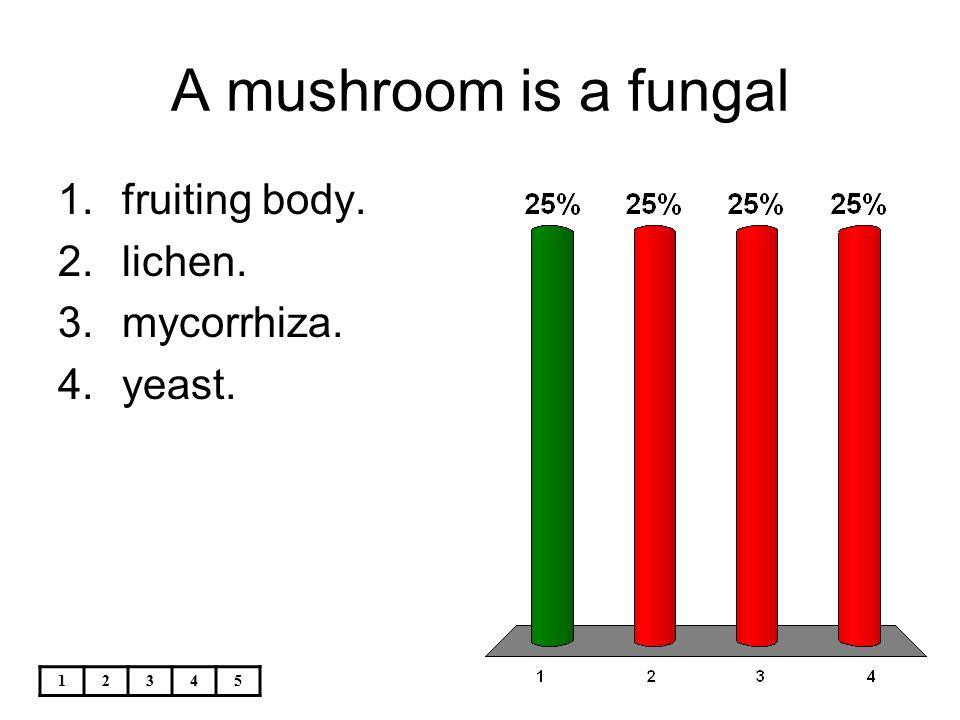 A mushroom is a fungal fruiting body. lichen. mycorrhiza. yeast. 1 2 3
