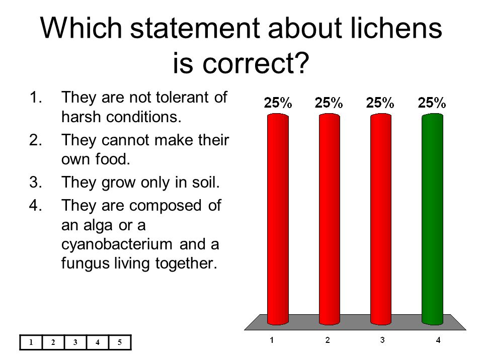 Which statement about lichens is correct