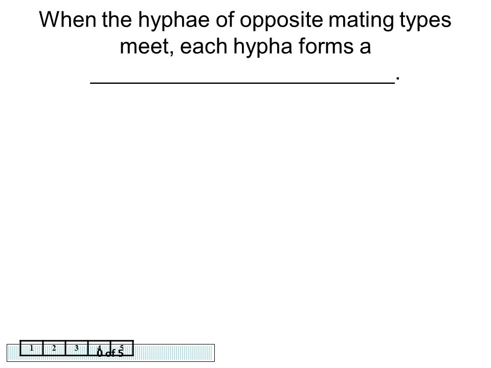 When the hyphae of opposite mating types meet, each hypha forms a _________________________.