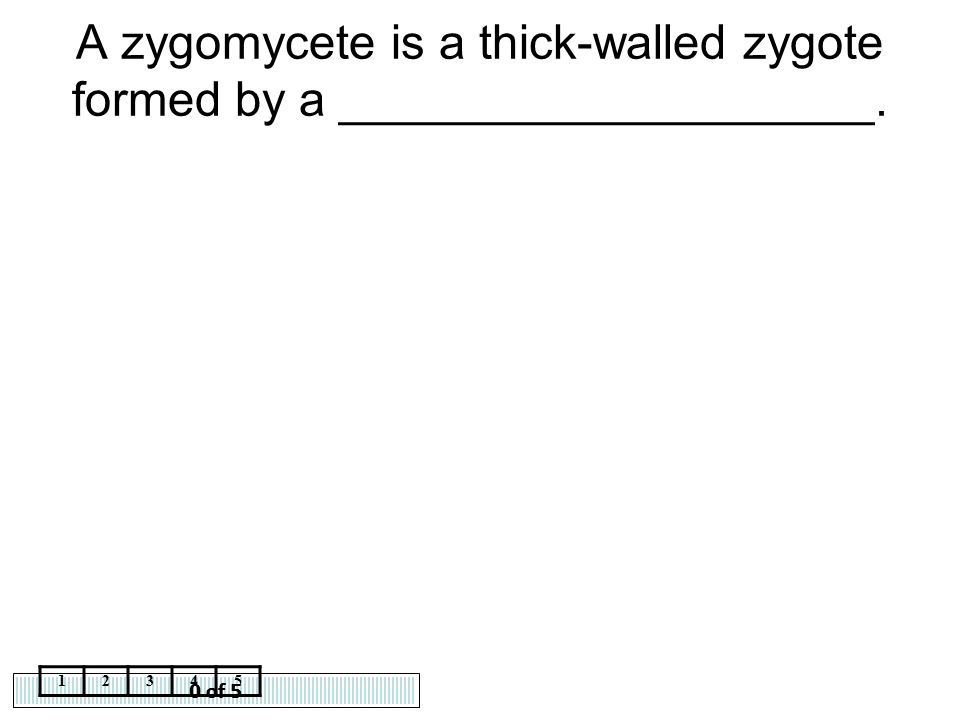 A zygomycete is a thick-walled zygote formed by a ____________________.