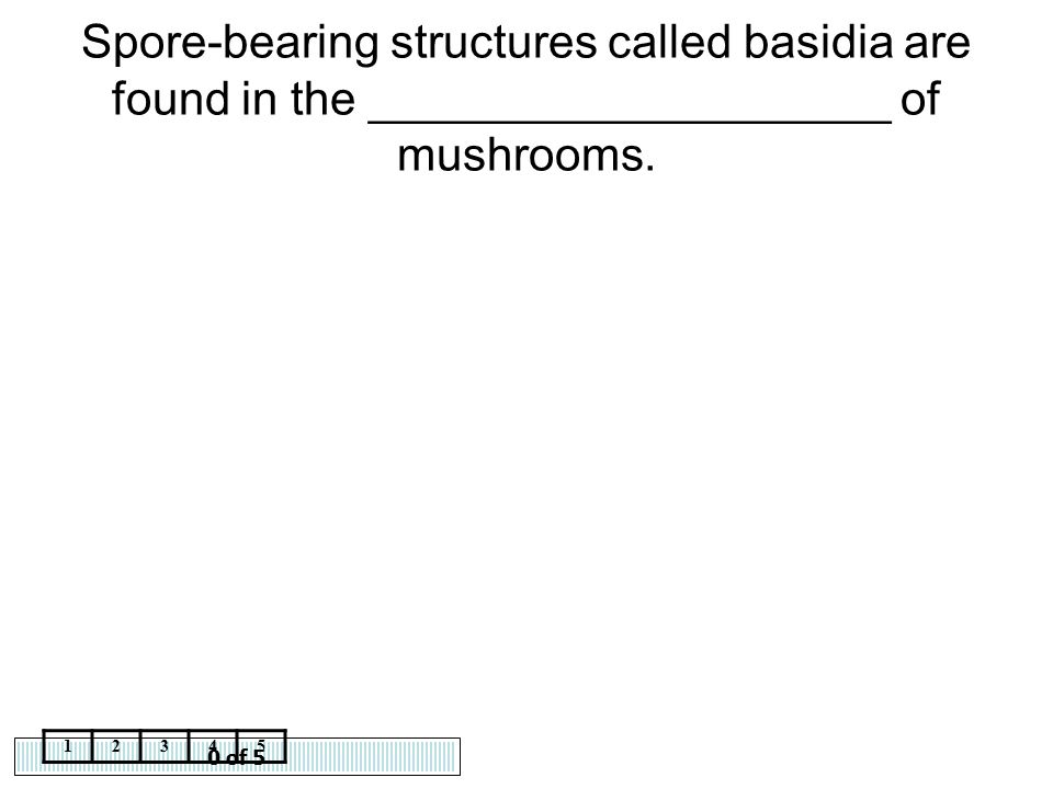Spore-bearing structures called basidia are found in the ____________________ of mushrooms.